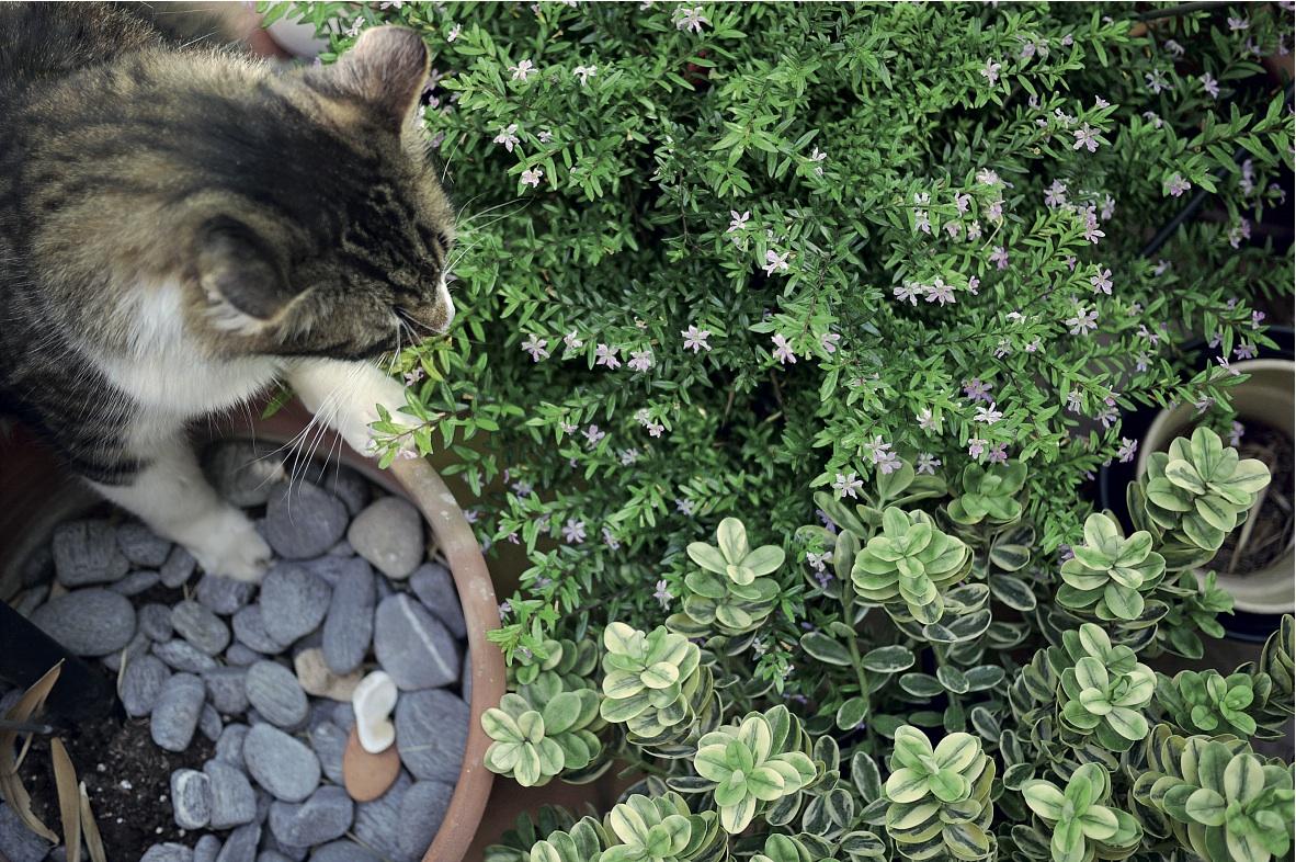 563f6388370d ΤΡΙΧΕΣ – ΙΔΕΑ – Σώστε τις γλάστρες από τις γάτες
