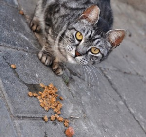 community cat eats