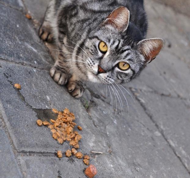 70cba3d4c0e0 ΤΡΙΧΕΣ – Επιτρέπεται να ταΐζουµε αδέσποτα