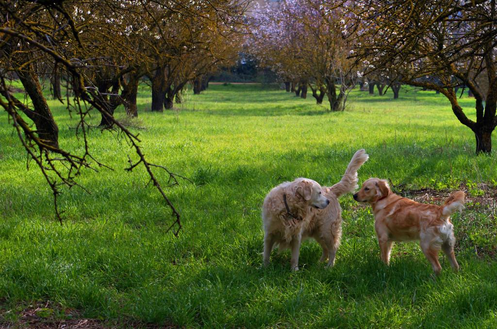 Δάσος Συγγρού (Photo courtesy of Carlo Raciti | www.carloraciti.com)