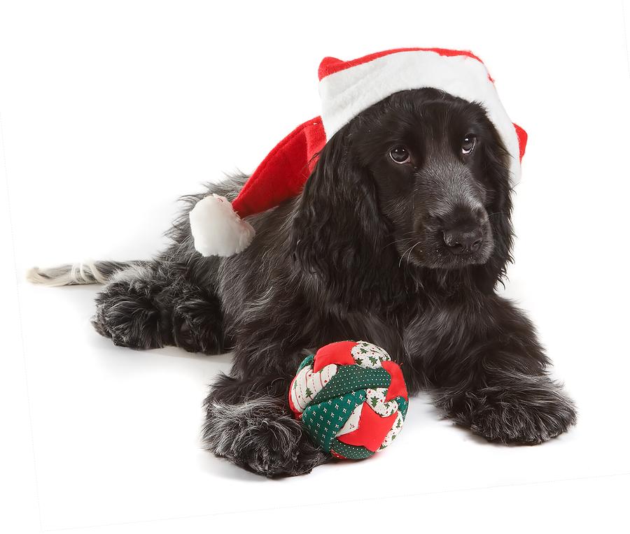 Christmas_Yeki