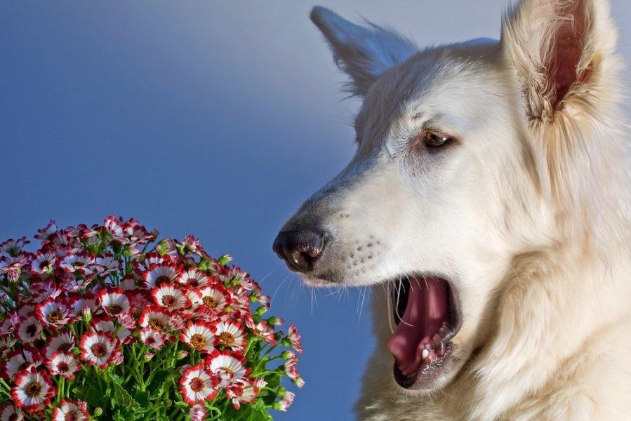dogsneeze