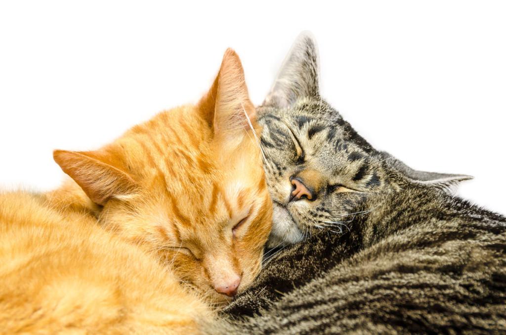9d392ee42534 ΤΡΙΧΕΣ – Mια γάτα για τη γάτα μας