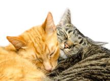 27f7ac0c5fea Mια γάτα για τη γάτα μας. «
