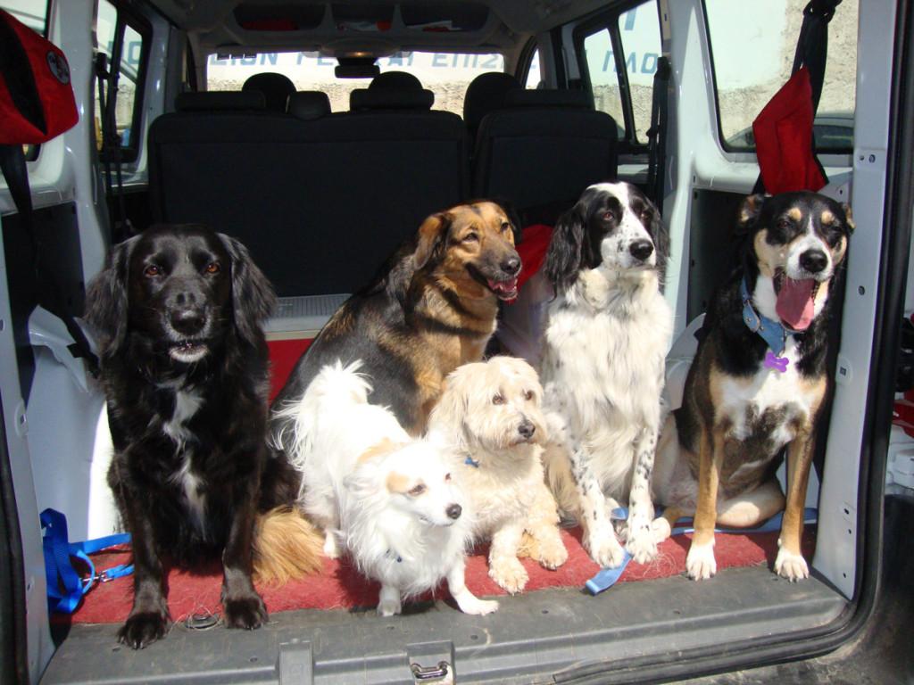 "H Τάι με τους... συναδέλφους της. Όλοι οι σκύλοι του προγράμματος είναι ημίαιμοι. Γιατί; «Μα γιατί πιστεύουμε ότι δεν έχουν τίποτα απολύτως να ζηλέψουν από τους ""καθαρόαιμους"". Οι ημίαιμοι, που στη συντριπτική τους πλειονότητα είναι αδέσποτοι και συνήθως προέρχονται από επίσης ημίαιμους γονείς, ζουν στο δρόμο κι έτσι έχουν αναγκαστεί να έχουν άμεση επαφή με το ένστικτό τους, ώστε να καταφέρνουν να επιβιώνουν σε σκληρές συνθήκες. Επίσης, έτσι αναπτύσσουν μεγάλη ευφυΐα και φυσικά είναι απολύτως εκπαιδεύσιμοι», εξηγεί η Αθηνά Παπάζογλου, υπεύθυνη των προγραμμάτων «Εκστρατεία Ενημέρωσης» και «Σκύλοι Θεραπευτικής Επαφής» της SAPT Hellas."