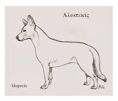 alopekis_skitso