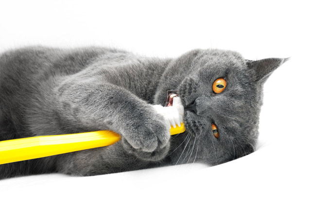 cat brush www