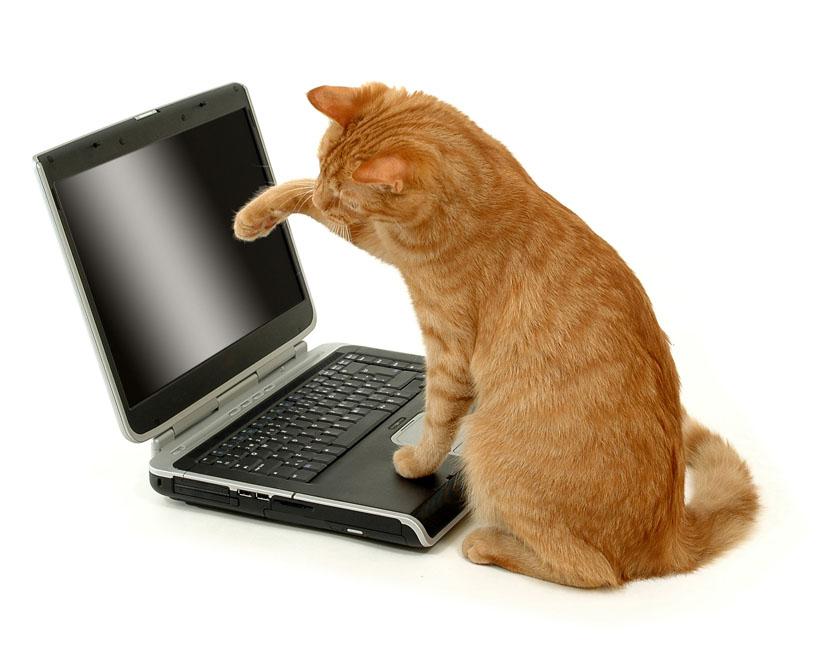 a70aba549197 ΤΡΙΧΕΣ – Πώς η γάτα θα σταματήσει να μου πατάει το πληκτρολόγιο