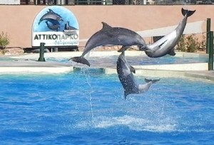 delfinia attiko