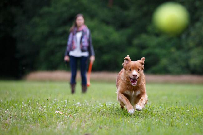 balakidog