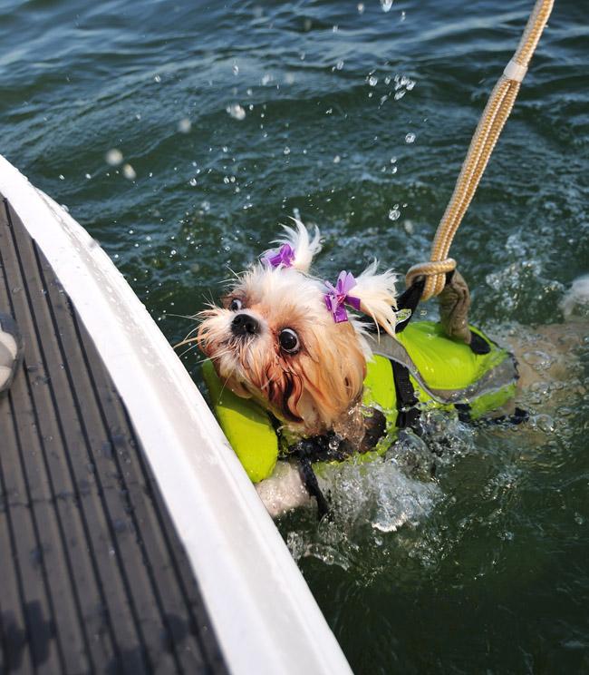 dogvestswim