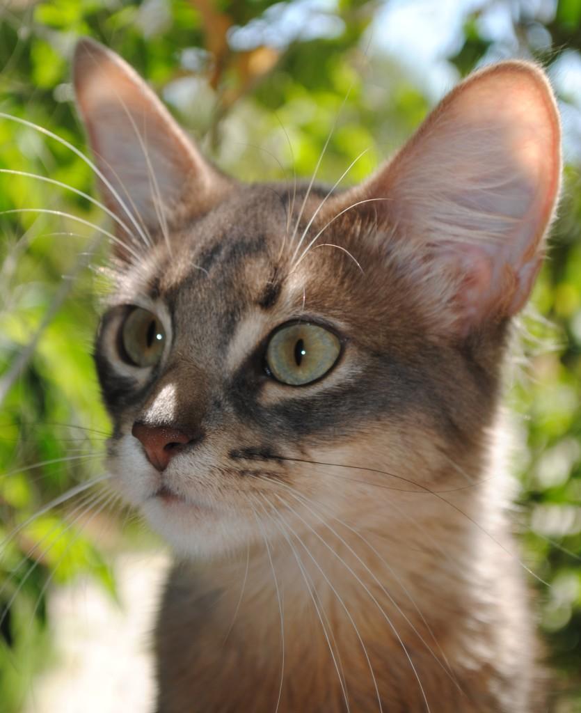 LISA 5MONTHS-EMO 9 MONTHS 061 (60)