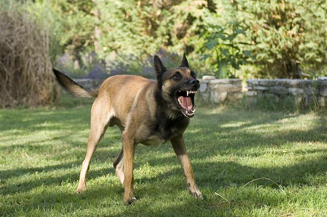 15 angry dog www