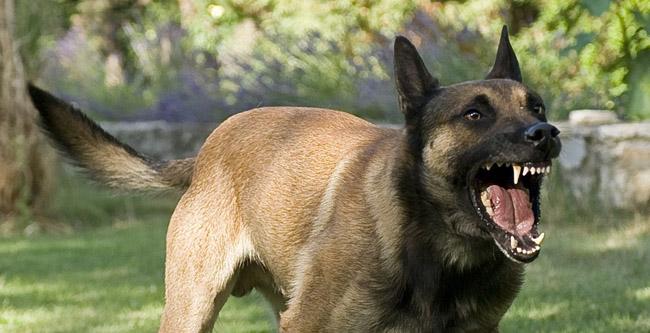 15 angry dog