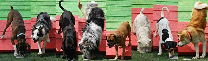 Τα σκυλίσια μέλη των Agility Addicts