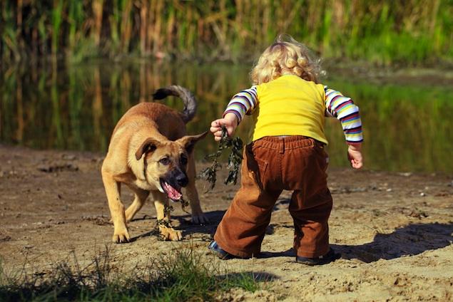 dog child 2