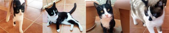Αχινός, Παρασκευάς, Μαγκίτα, Τρίτη... (από αριστερά)