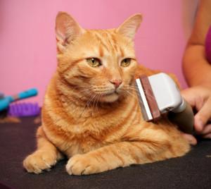 τρίχες τρίχα Σκύλος κατοικίδια Γάτα βούρτσα
