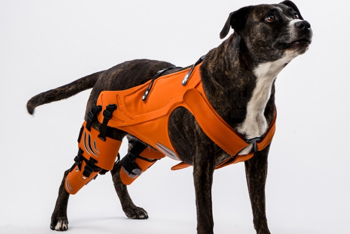Hipster-dog-harness-by-Galia-Weiss-1