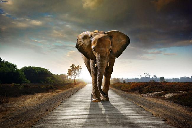 elephant www