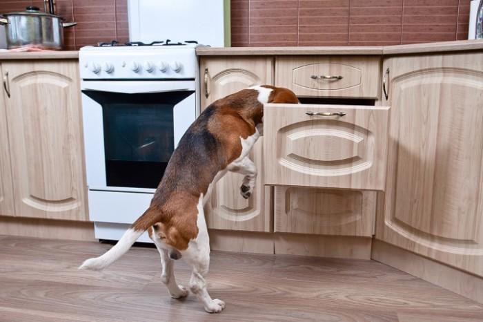 χαρακτήρας Σκύλος παιχνίδι κουτάβι