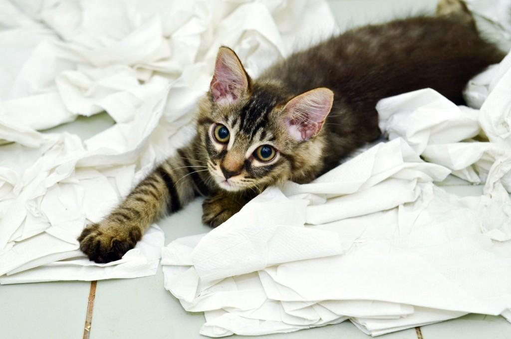 naughty kitten1