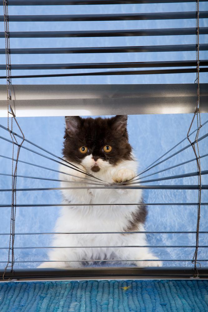 naughty kitten2