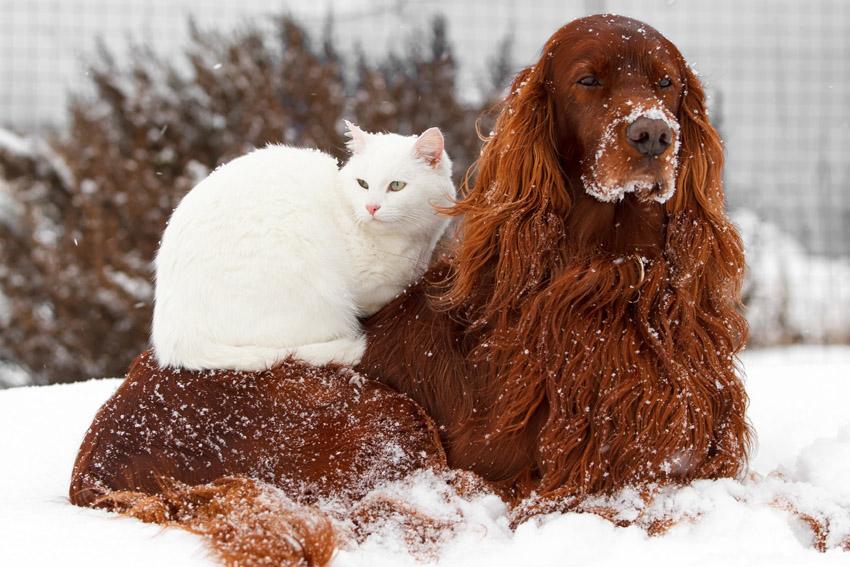 ζώα στο χιόνι