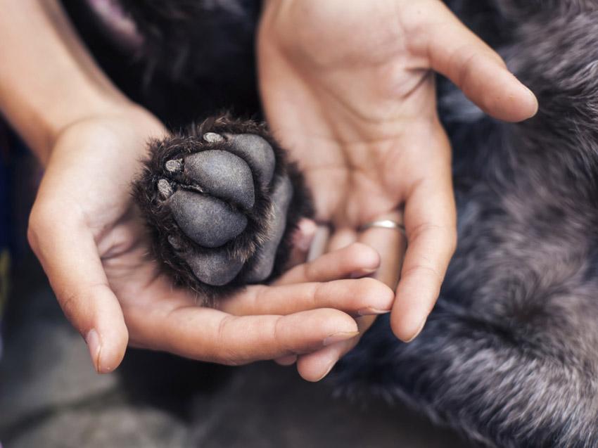 paws www