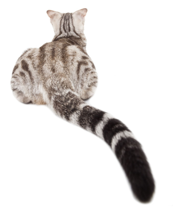 cat tail1