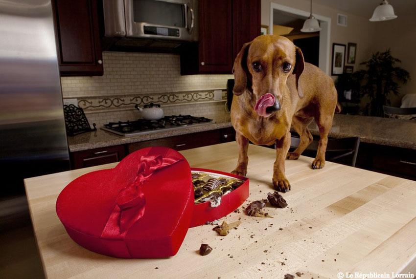 choco dog www