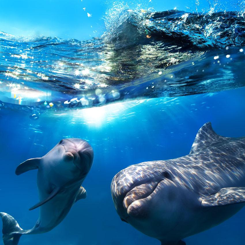 dolphins www