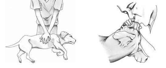 CPR-dog