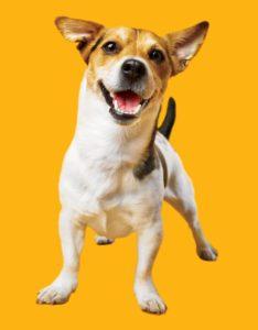 δόντια σκύλου βούρτσισμα