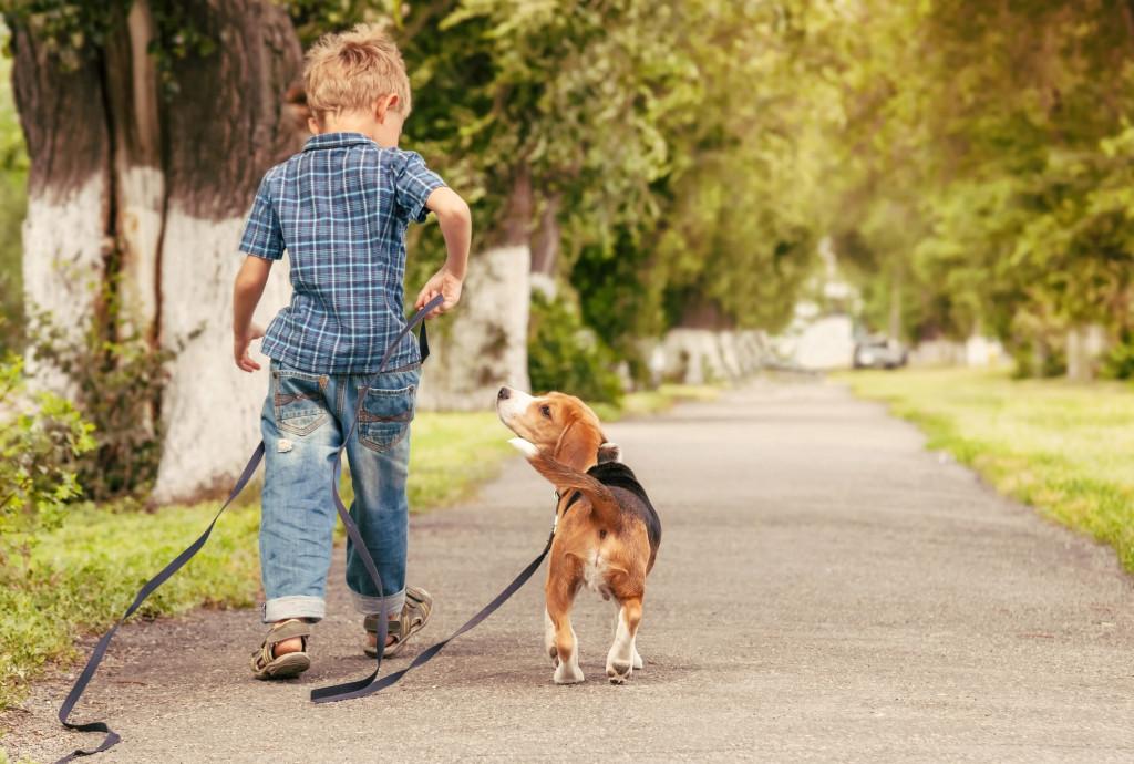 kid n dog www
