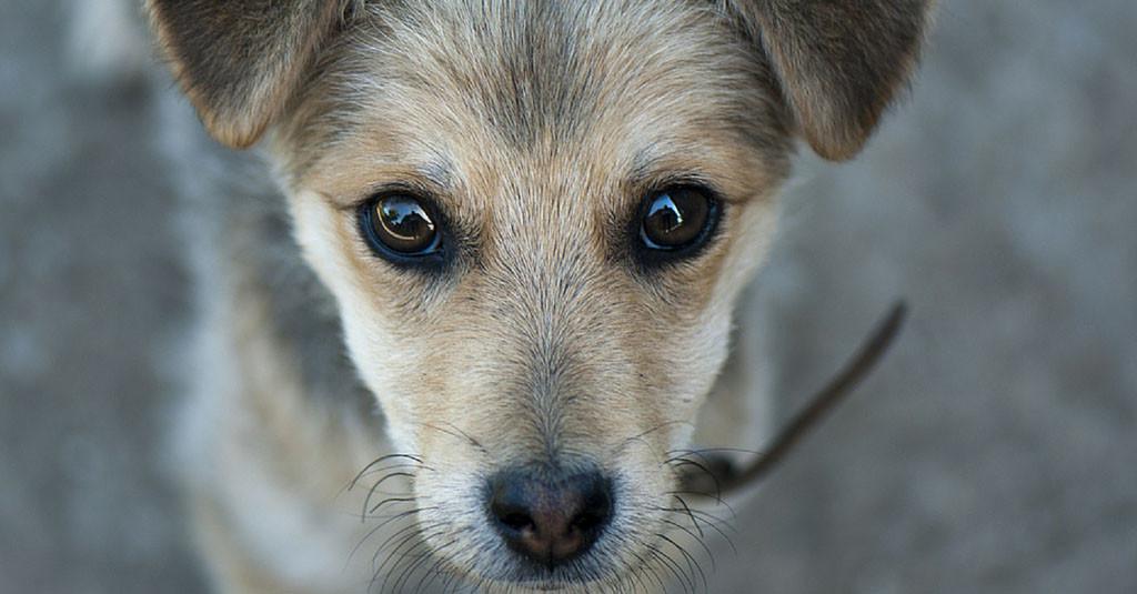 puppy 2 www