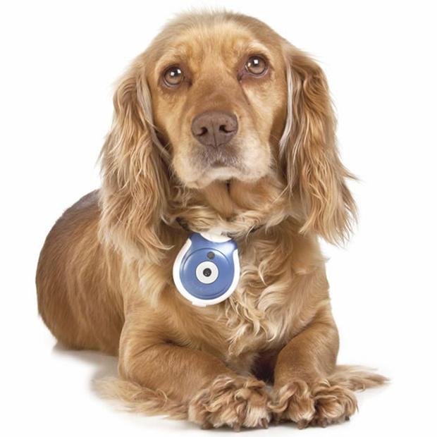 Η κάμερα της φωτογραφίας λέγεται Pet's Eye View camera, είναι σχεδιασμένη ειδικά για τετράποδους  & κοστίζει 55 δολάρια.