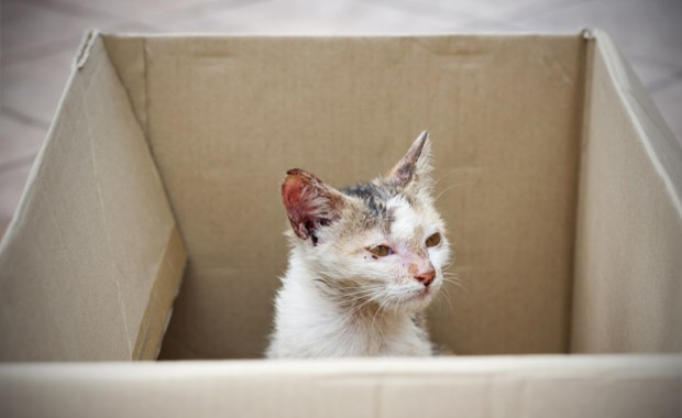 stray cat in a box