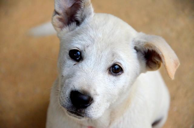 stray pup