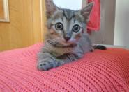 pipis adopt