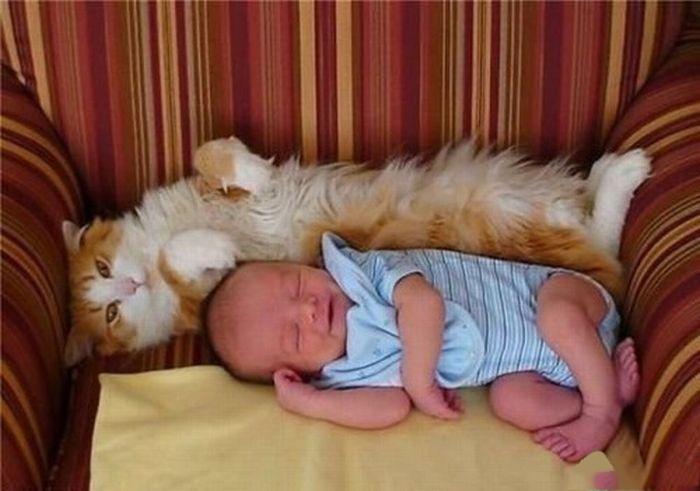 cat newborn
