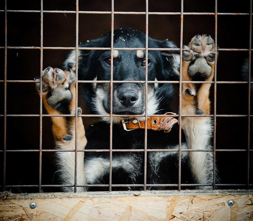 feat shelter-dog