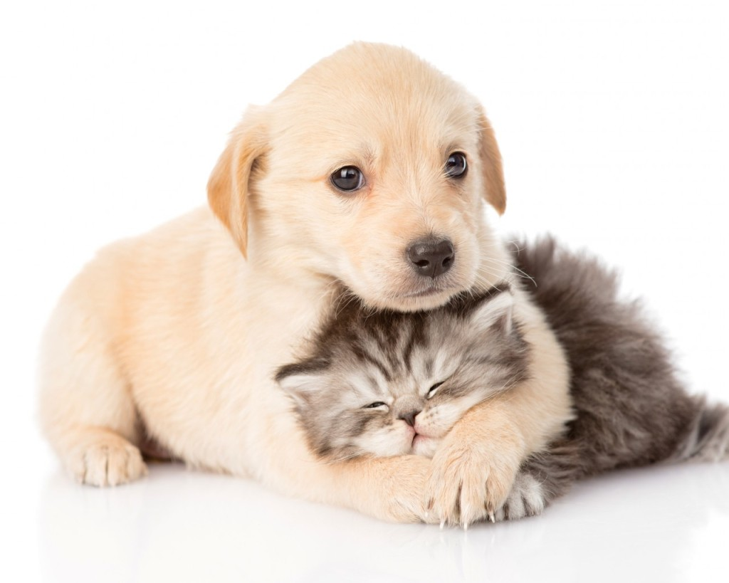 sw cat puppy