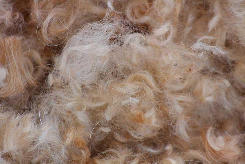 sw dog hair