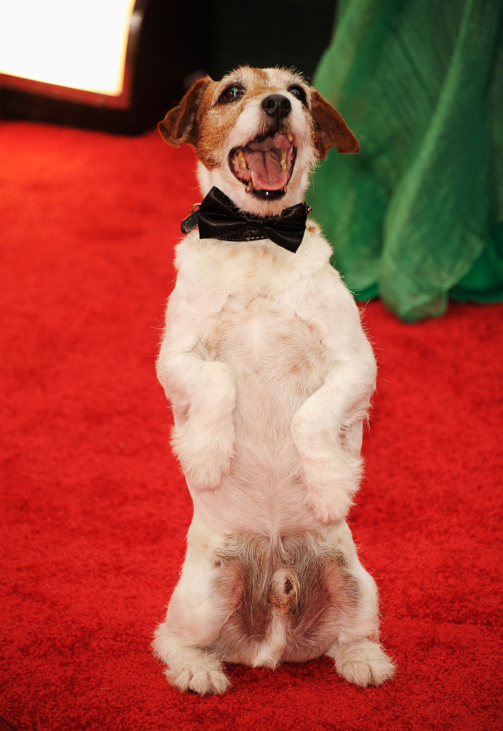 "Uggie the Dog from ""The Artist"" arrives at the 69th Annual Golden Globe Awards held at the Beverly Hilton Hotel on January 15, 2012 in Beverly Hills, California. Frazer Harrison/Getty Images/AFP== FOR NEWSPAPERS, INTERNET, TELCOS & TELEVISION USE ONLY =="