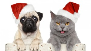 Pug-and-Cat-Christmas-Pictures