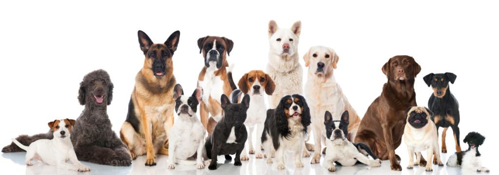 many breeds