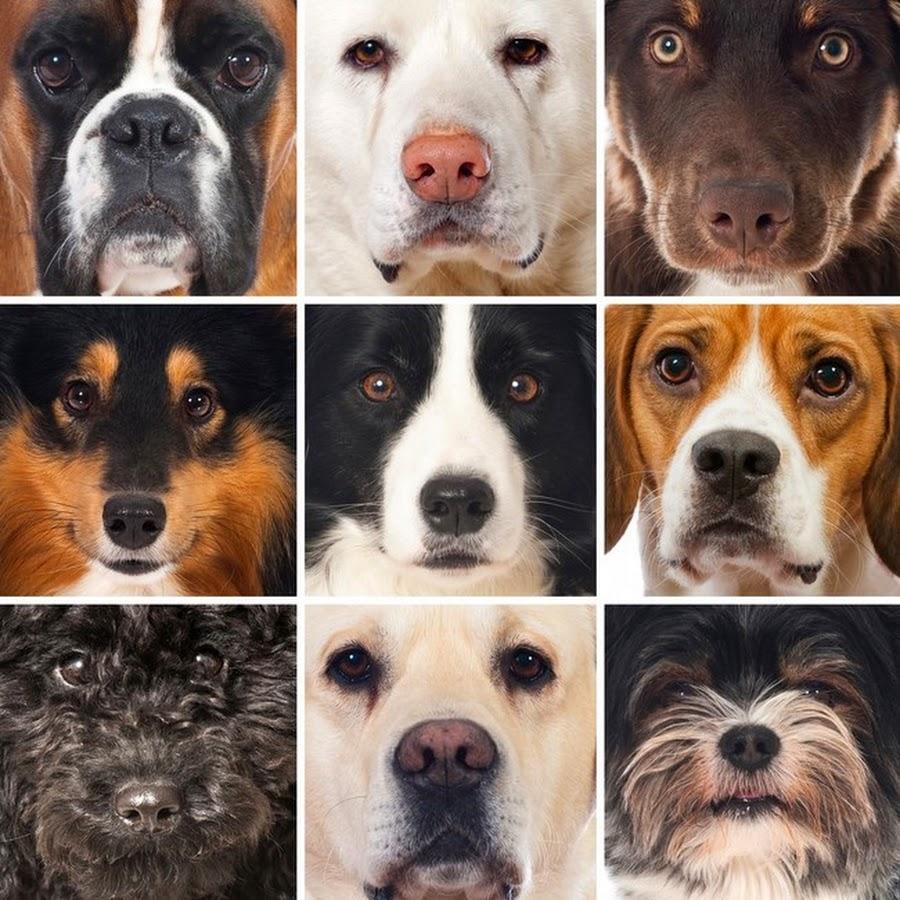 swiifer dog breeds