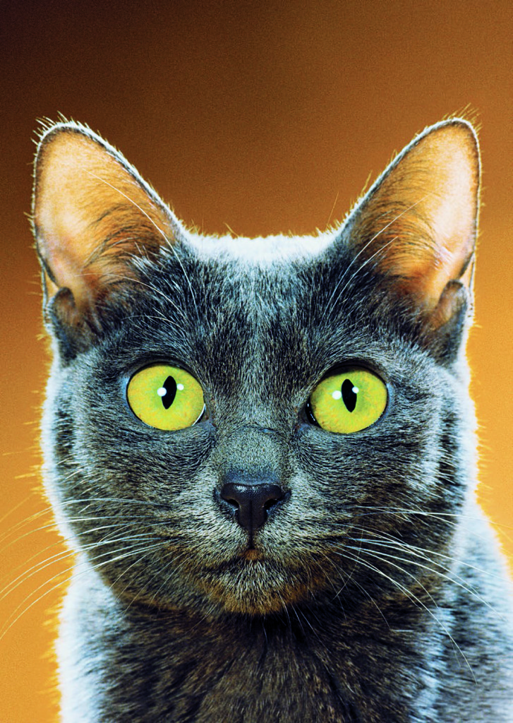 Photograph from Walter Chandoha: The Cat Photographer (Aperture, 2015)