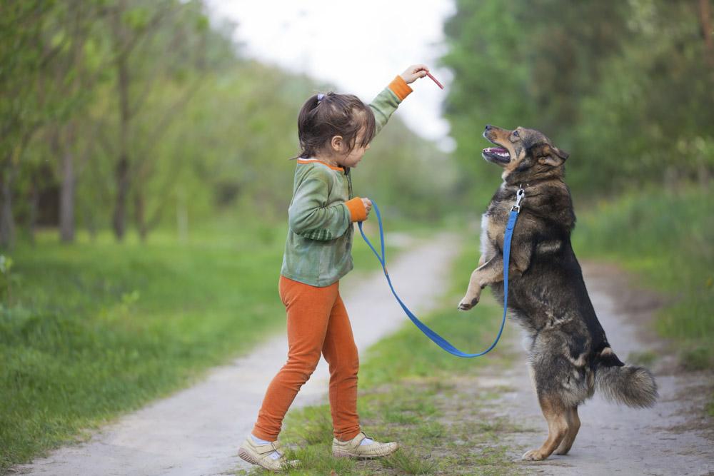 ee5afd7ca62e ΤΡΙΧΕΣ – Από ποια ηλικία μπορεί ένα παιδί να φροντίσει το σκύλο ή τη ...